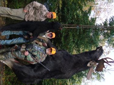 bear/moose