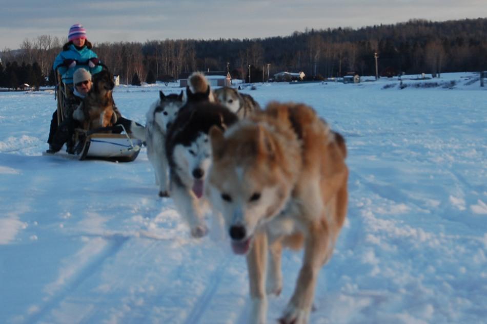 Dogsledding
